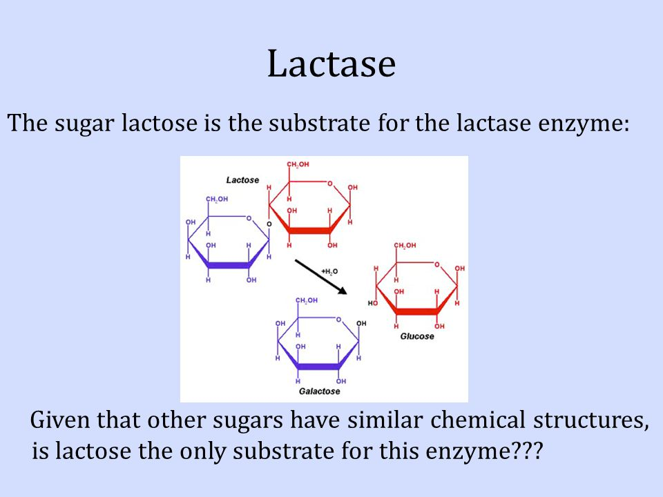 lactase enzyme properties Test the chemical and physiological properties of this particular enzyme  the  metabolism of lactose into galactose and glucose is facilitated by lactase.
