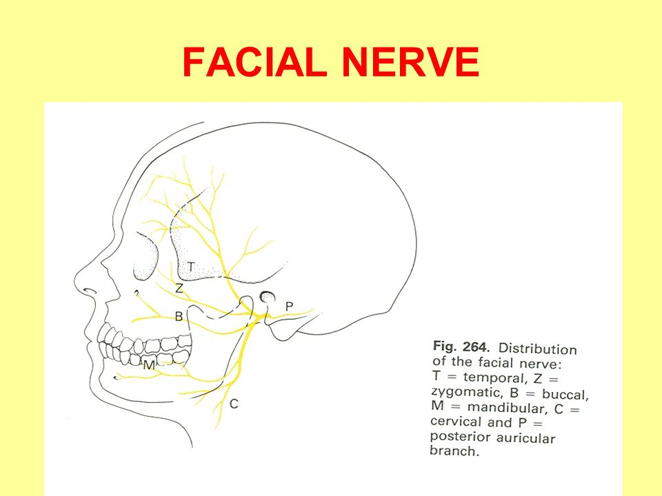 Remedies for facial paralysis
