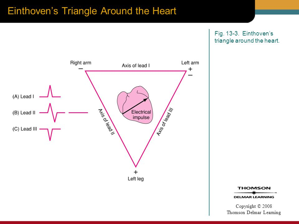 Einthoven's Triangle Around the Heart
