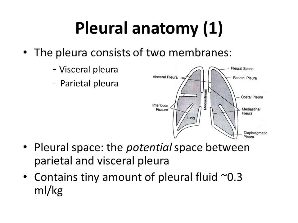 Pleural space anatomy