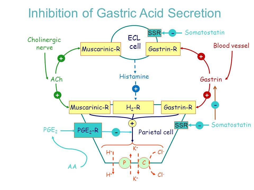 Inhibition of Gastric Acid Secretion