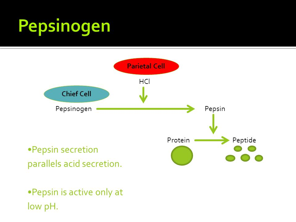 Pepsinogen Pepsin secretion parallels acid secretion.