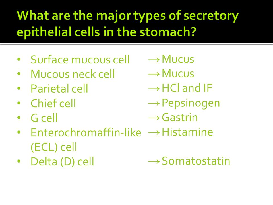 What are the major types of secretory epithelial cells in the stomach