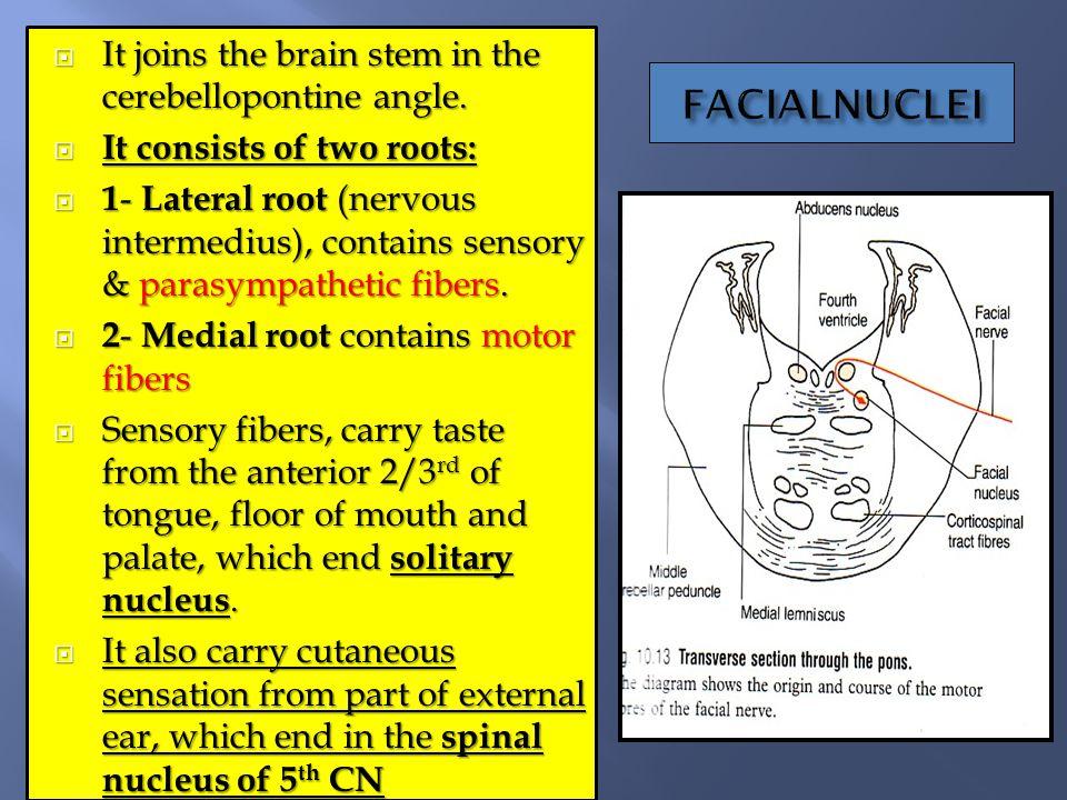 Cranial Nerves I By Prof Saeed Makarem Ppt Video Online