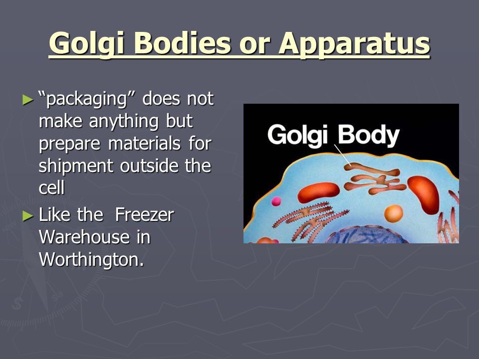 Comparing a cell to worthington ppt video online download for Anything made by waste material
