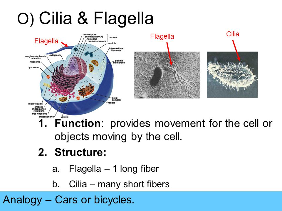 Cell Structures and Functions - ppt video online download