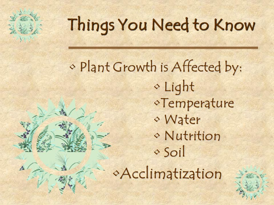 All you need to know about house plants ppt download for Things you need in a house