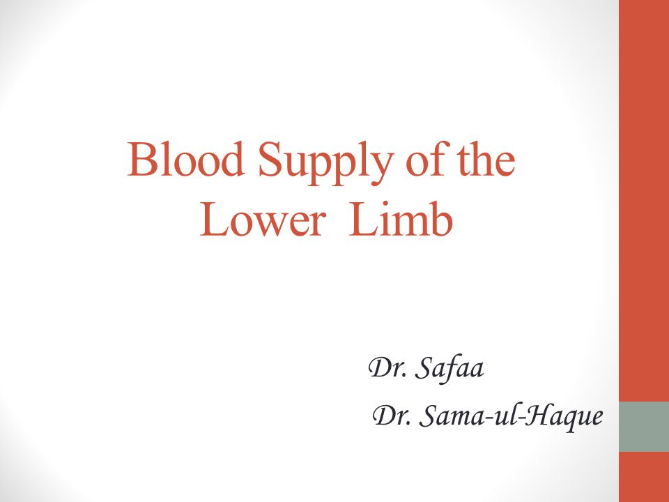 Blood Supply of the Lower Limb