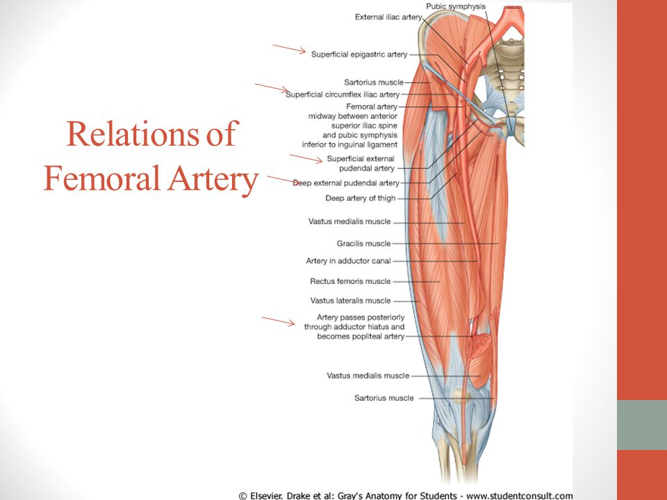 Images Of Femoral Artery
