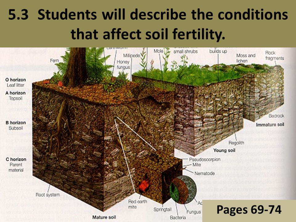 Chapter 5 northern character ppt video online download for Describe soil