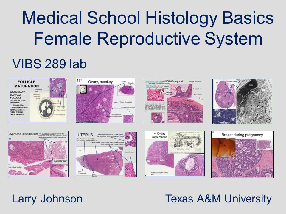 Medical School Histology Basics Female Reproductive System