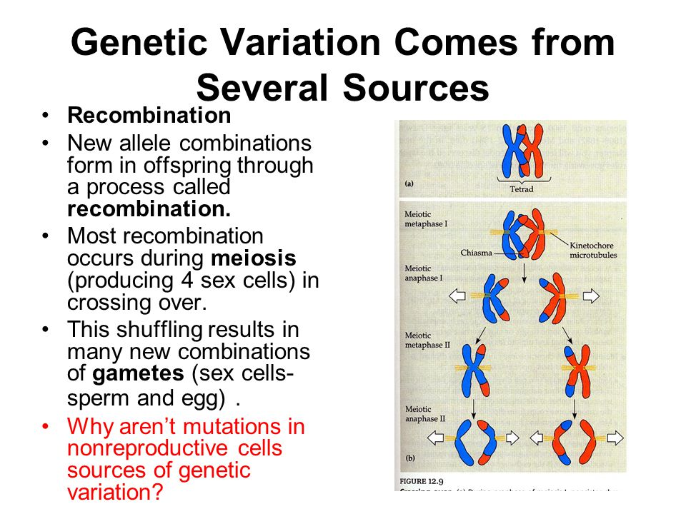 genetic variation Genetic variation and human evolution lynn b jorde, phd department of human genetics university of utah school of medicine the past two decades have witnessed an explosion o.