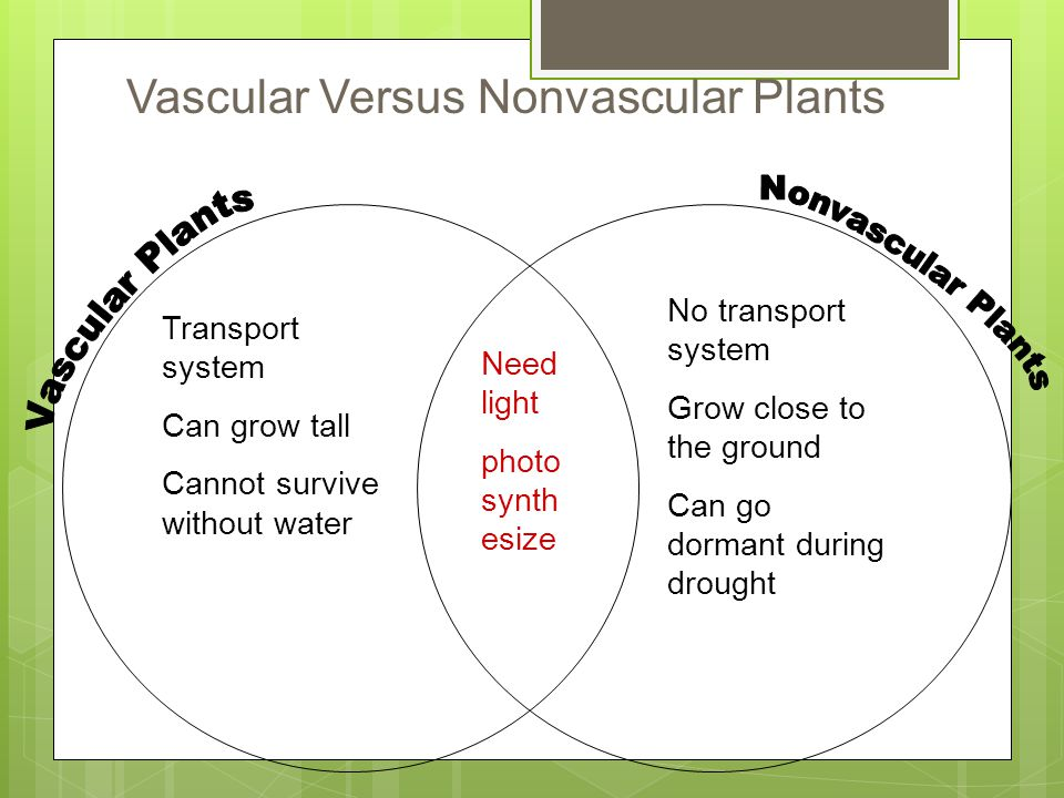 Plant Diversity and Life Cycles ppt download – Vascular and Nonvascular Plants Worksheet