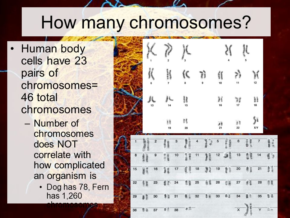 How many chromosomes does a human sex cell contain pics 25