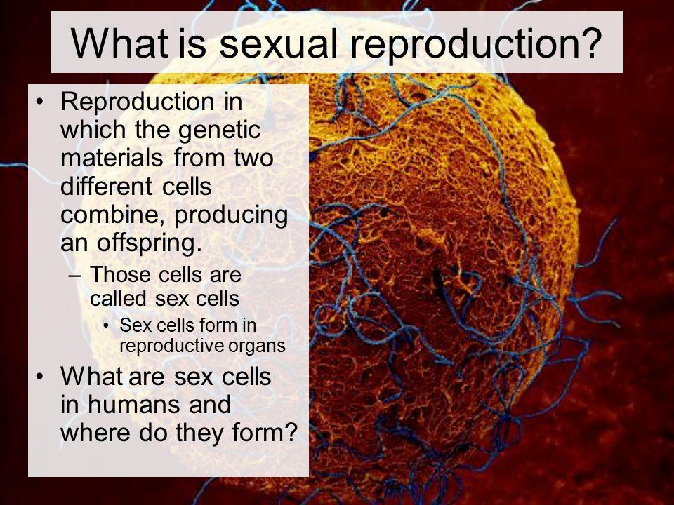 Where Do Sex Cells Form 34