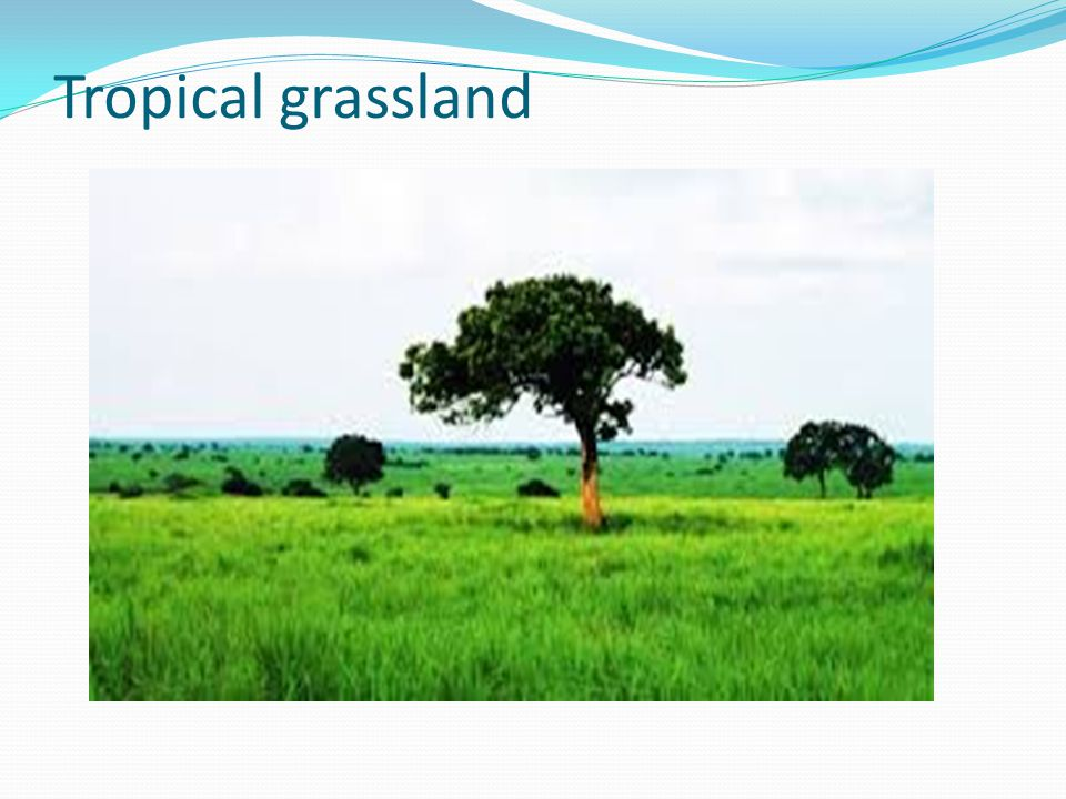tropical grassland features Learn about life for the animals of the world's grasslands special features animal species profiles learn about grassland animals grassland animals the.