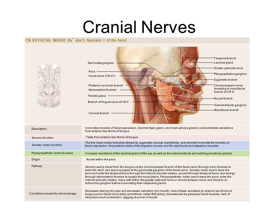 Cranial Nerves Of The Face And Mouth Motion And Sensation Oukasfo