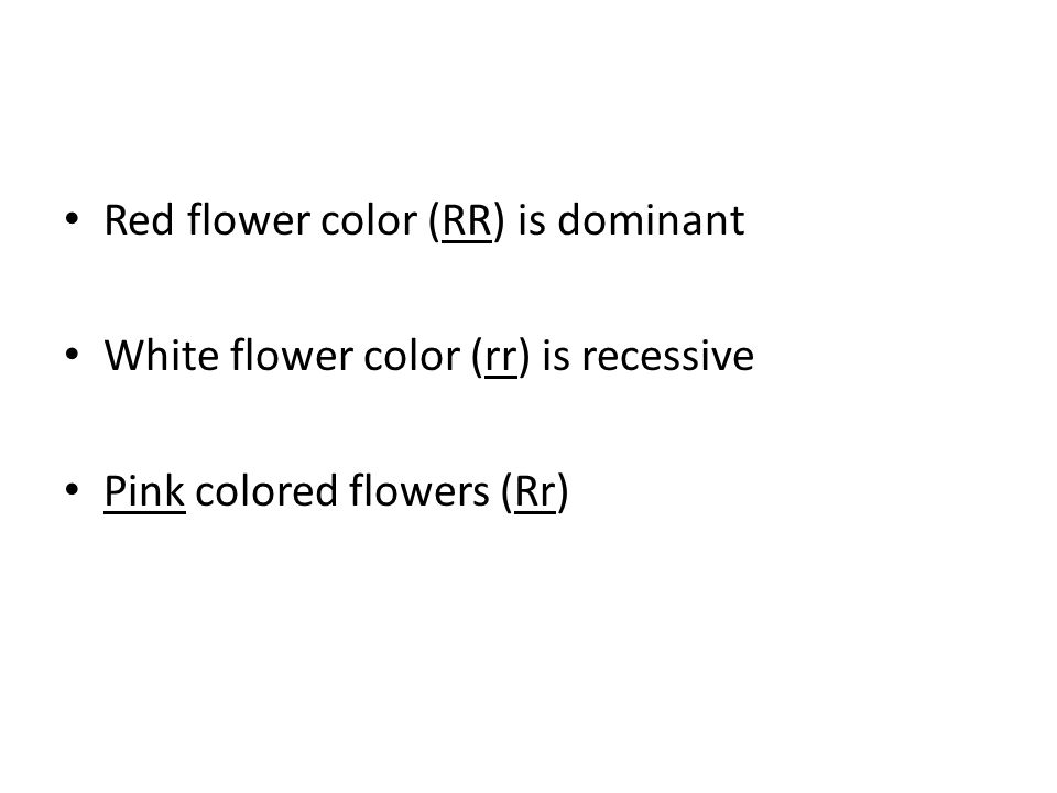 Red flower color (RR) is dominant