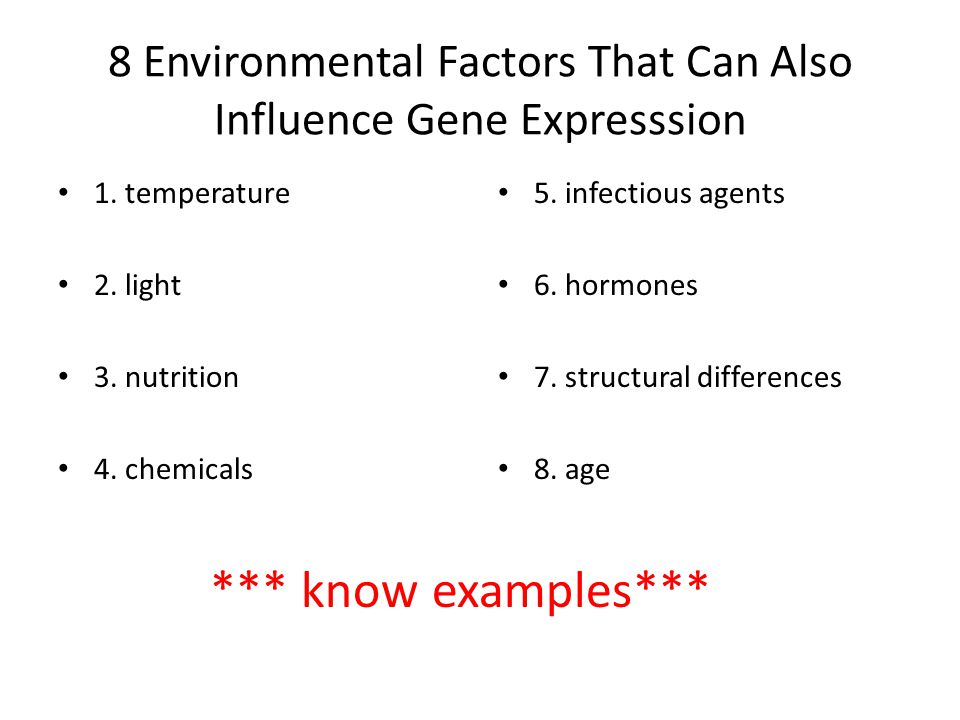 8 Environmental Factors That Can Also Influence Gene Expresssion