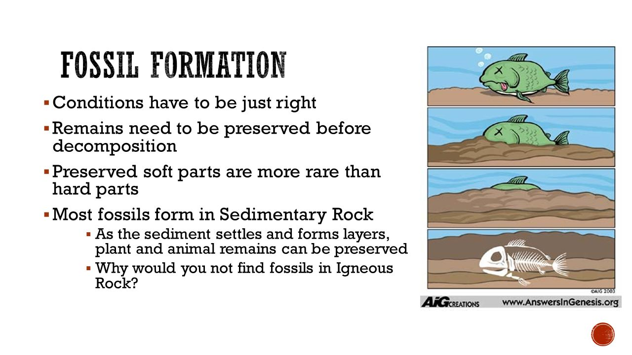 How Earth's Past is Revealed. - ppt download