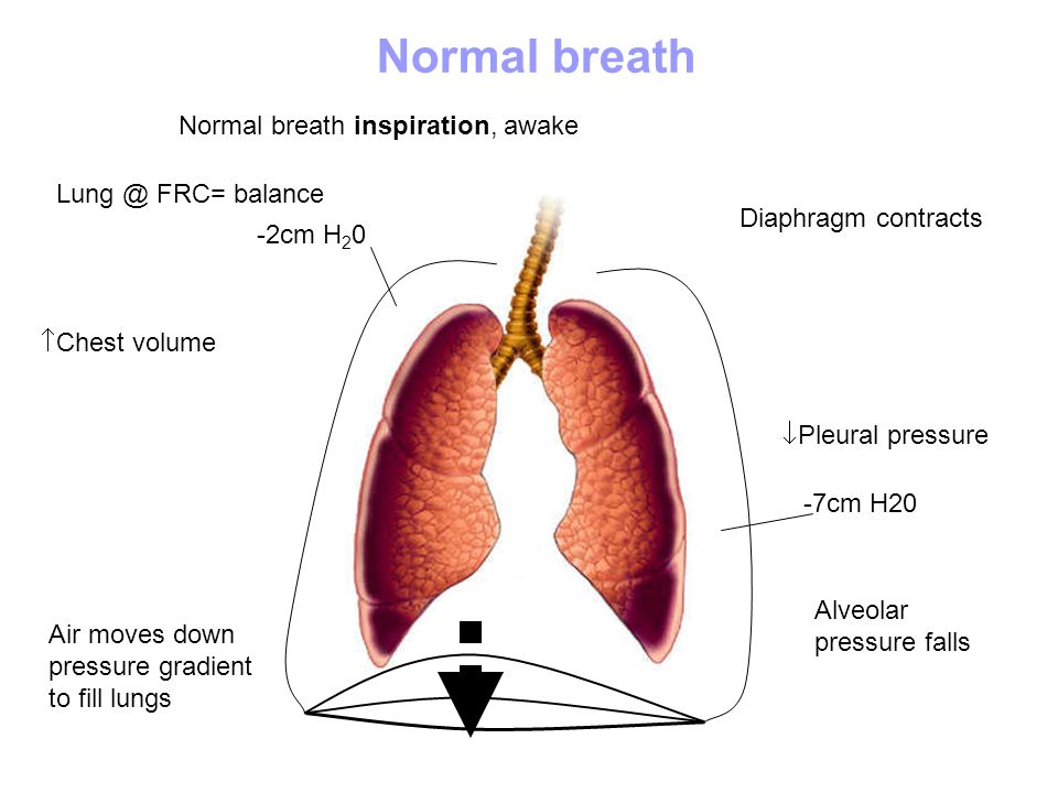 Normal breath Normal breath inspiration, awake Lung @ FRC= balance