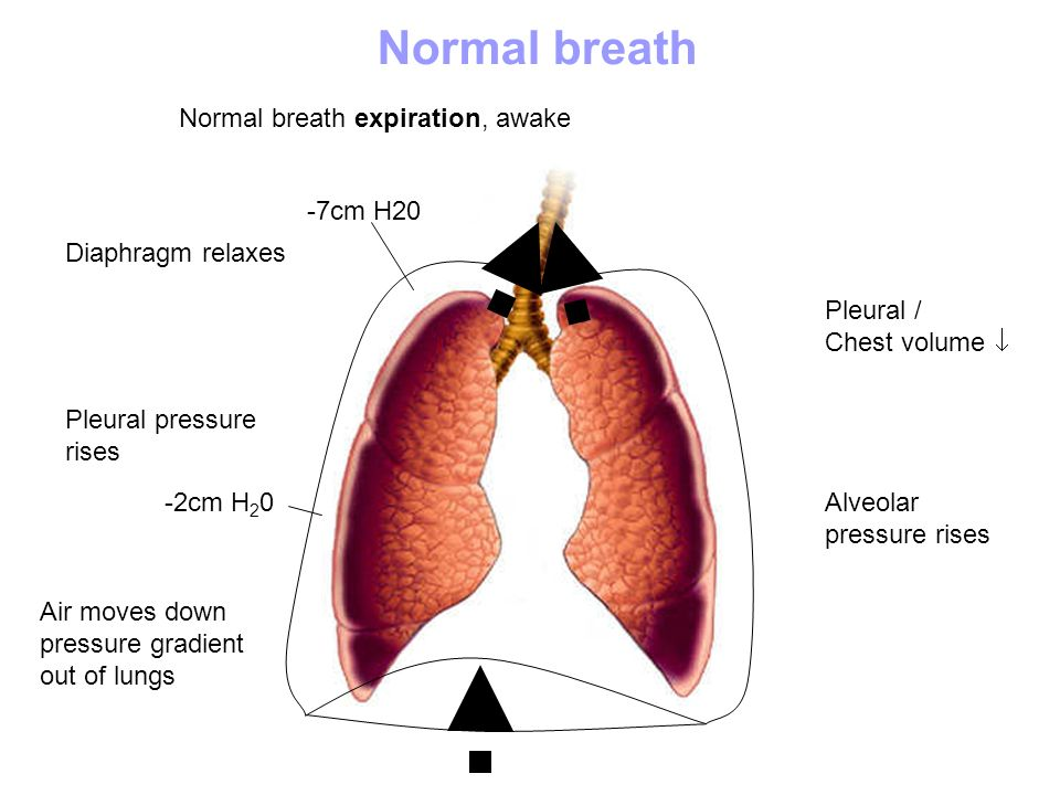 Normal breath Normal breath expiration, awake -7cm H20