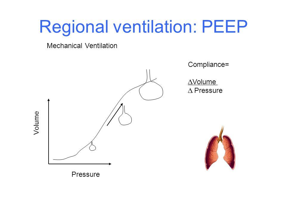 Regional ventilation: PEEP