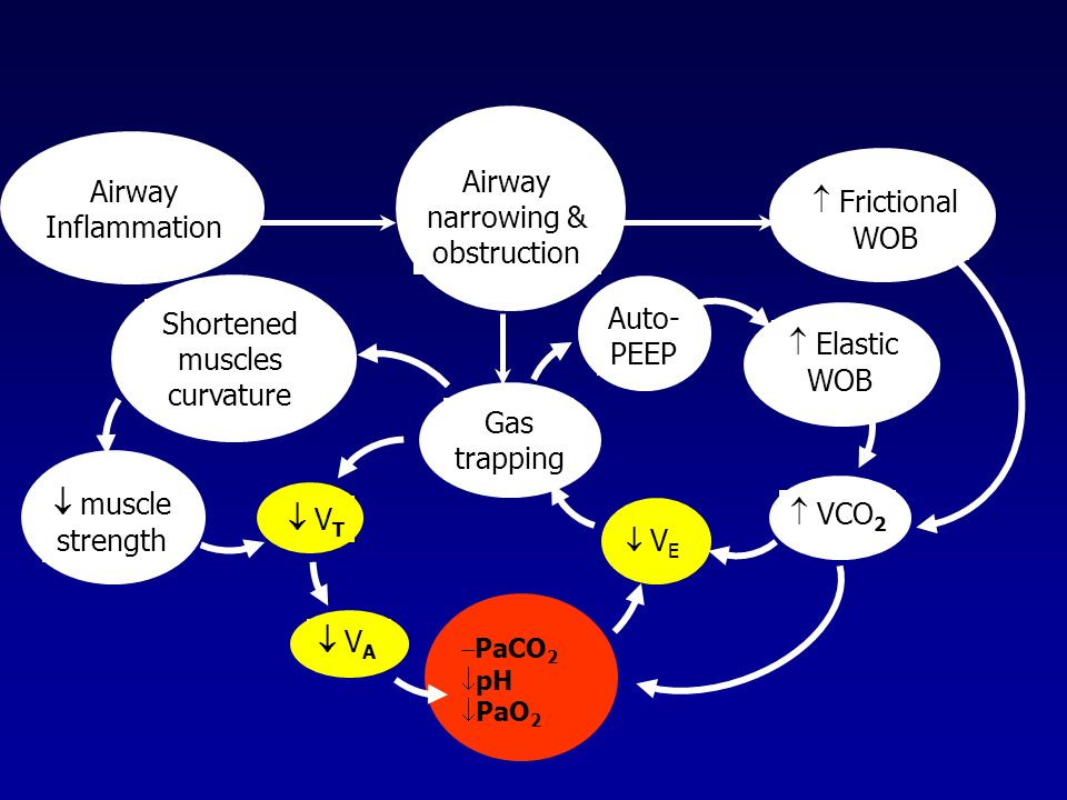 Airway Airway narrowing &  Frictional Inflammation obstruction WOB