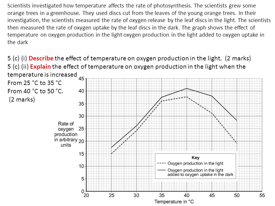 Scientists investigated how temperature affects the rate of photosynthesis. The scientists grew some orange trees in a greenhouse. They used discs cut from the leaves of the young orange trees. In their investigation, the scientists measured the rate of oxygen release by the leaf discs in the light. The scientists then measured the rate of oxygen uptake by the leaf discs in the dark. The graph shows the effect of temperature on oxygen production in the light oxygen production in the light added to oxygen uptake in the dark
