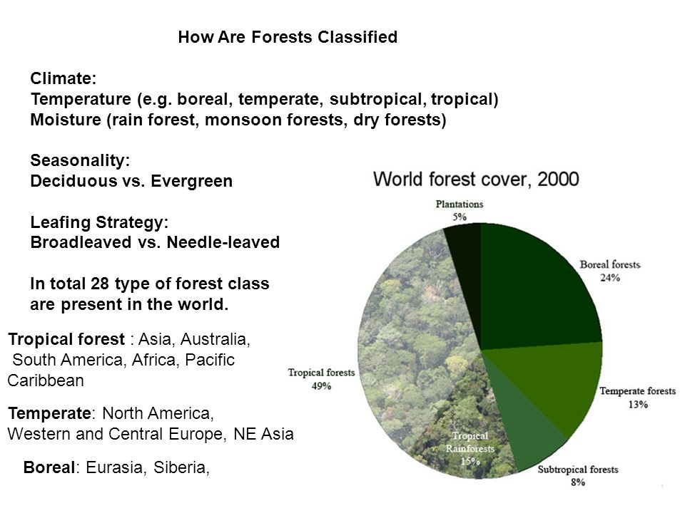 How Are Forests Classified