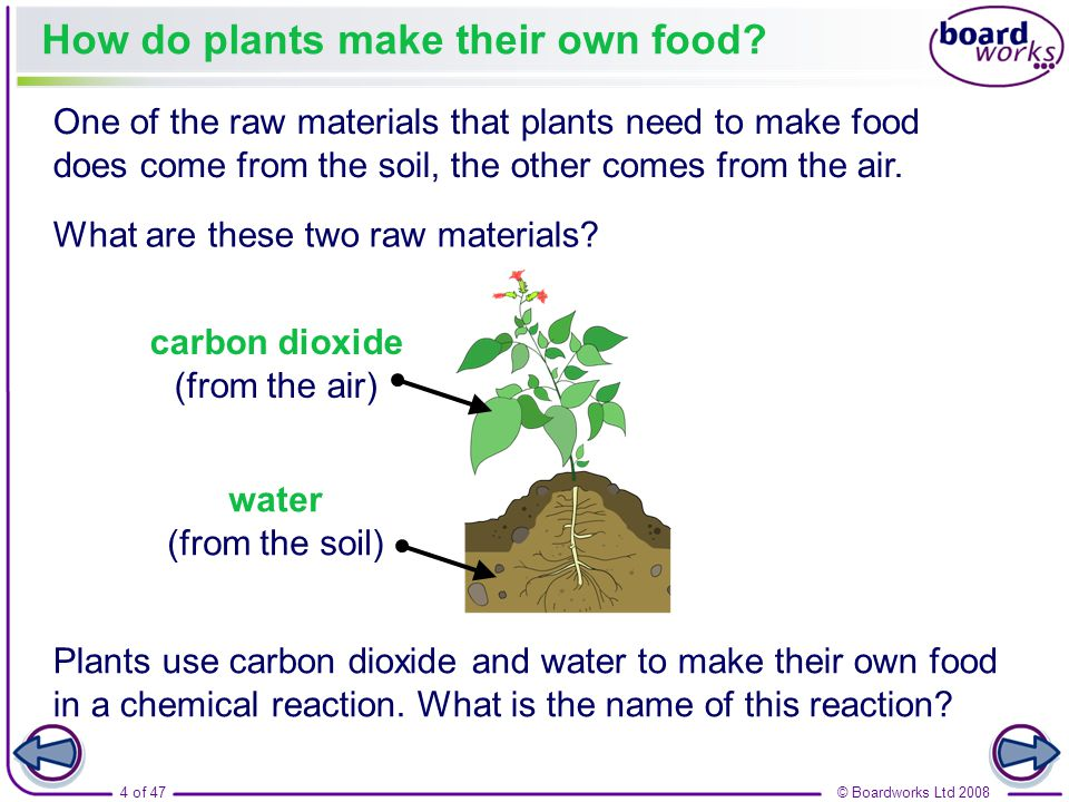 Plants and photosynthesis ppt video online download for What does the word soil mean