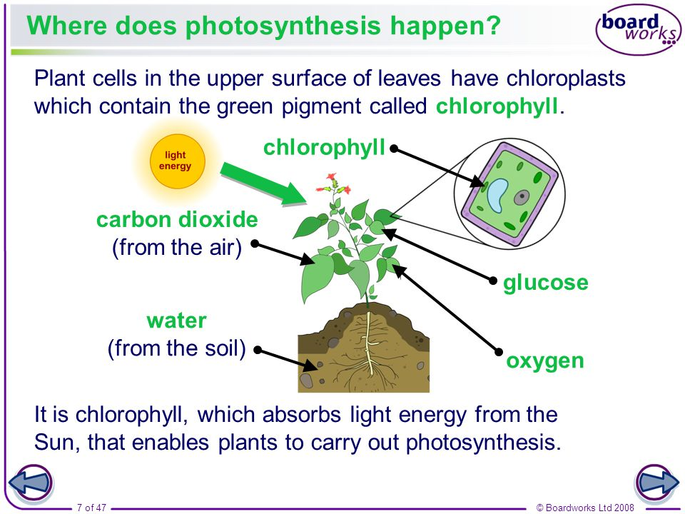 cell does chemosynthesis occur Chemosynthesis is the conversion of carbon compounds and other   chemosynthesis can occur in the presences of oxygen, but it is not.