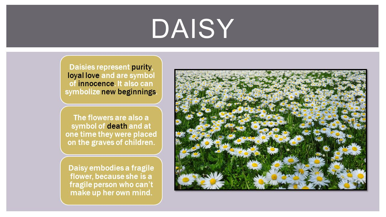 The great gatsby f scott fitzgerald ppt video online download daisy daisies represent purity loyal love and are symbol of innocence it also can buycottarizona Choice Image
