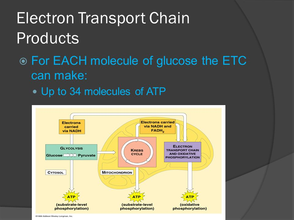 Electron Transport Chain Products