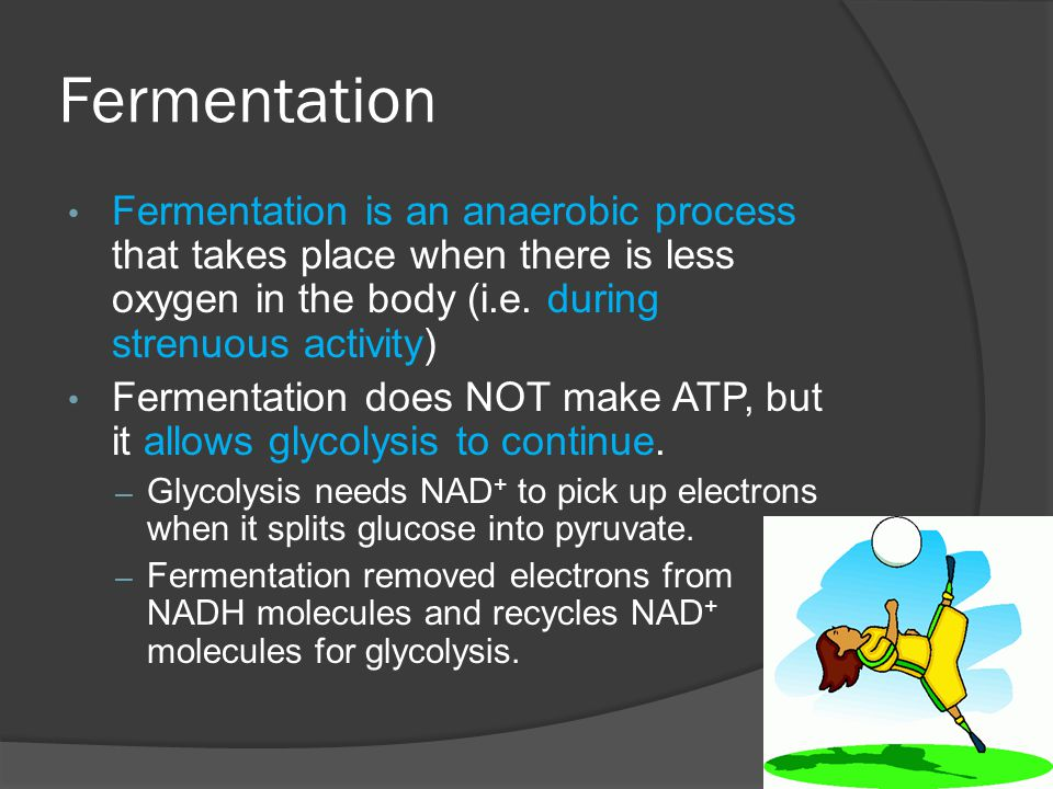 Fermentation Fermentation is an anaerobic process that takes place when there is less oxygen in the body (i.e. during strenuous activity)