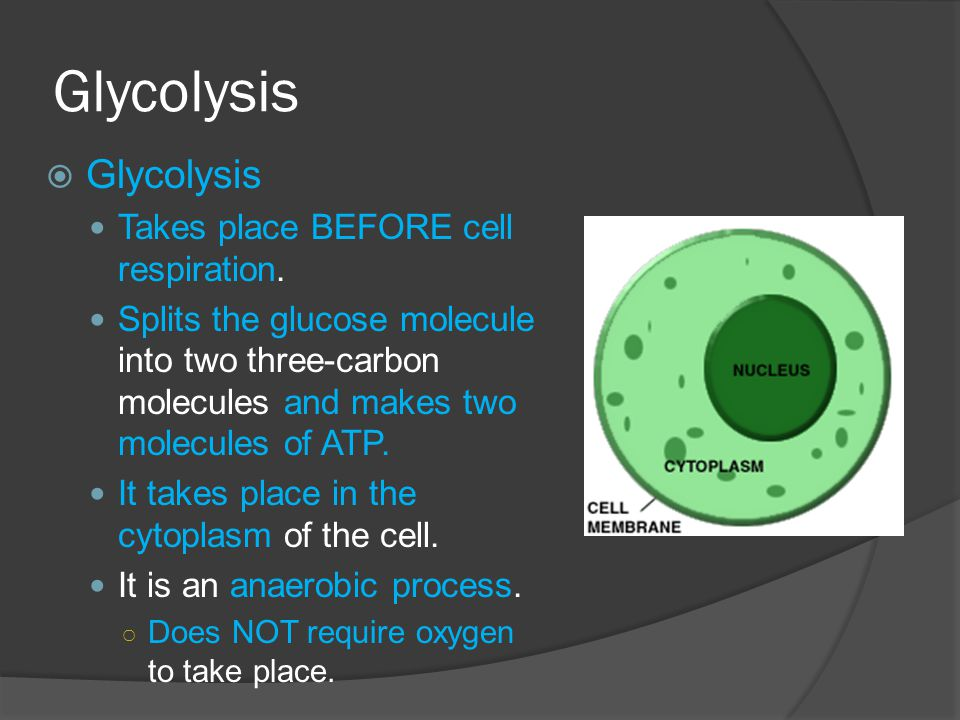 Glycolysis Glycolysis Takes place BEFORE cell respiration.