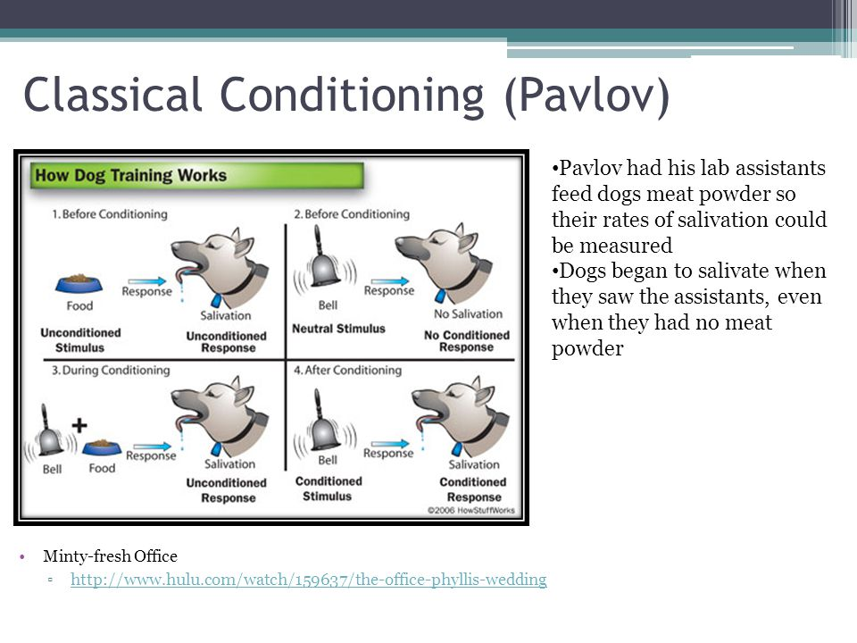 pavlov conditioning 1 1 learning: classical conditioning chapter 7 psy 12000003 2 learning how do we learn one way is through classical conditioning pavlov's experiments.