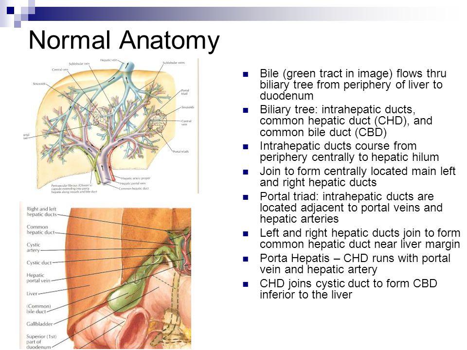 Anatomy of biliary system