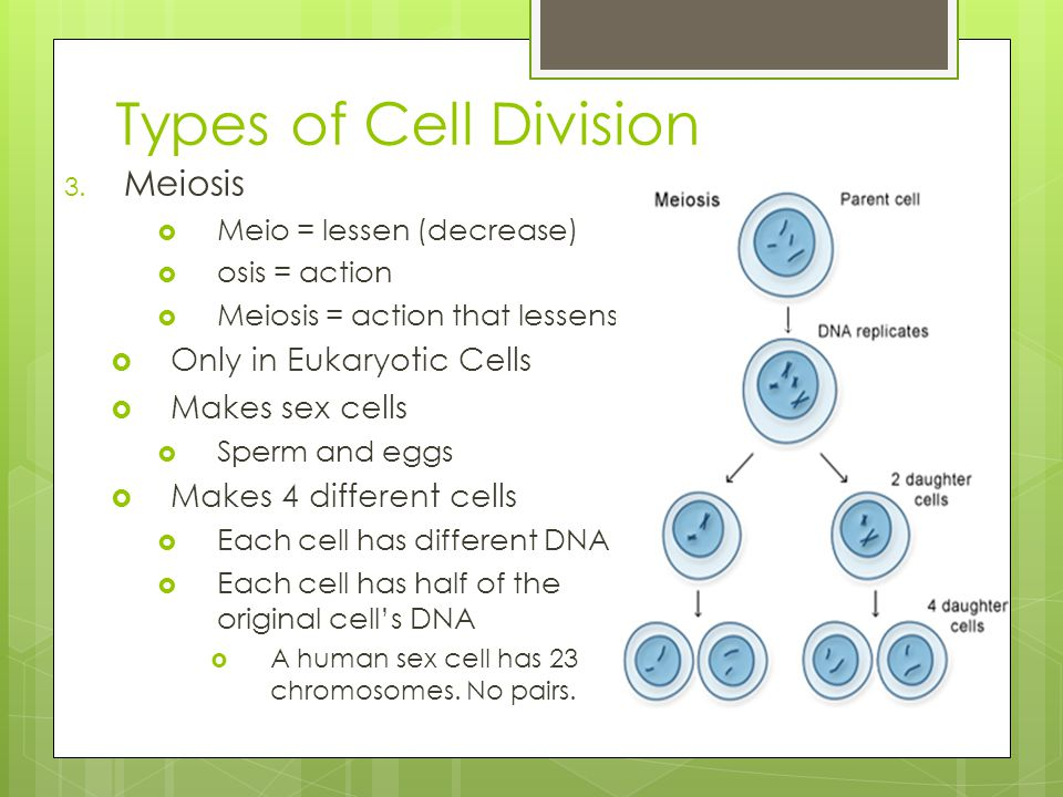 the types of cells division and reproduction mitosis and meiosis