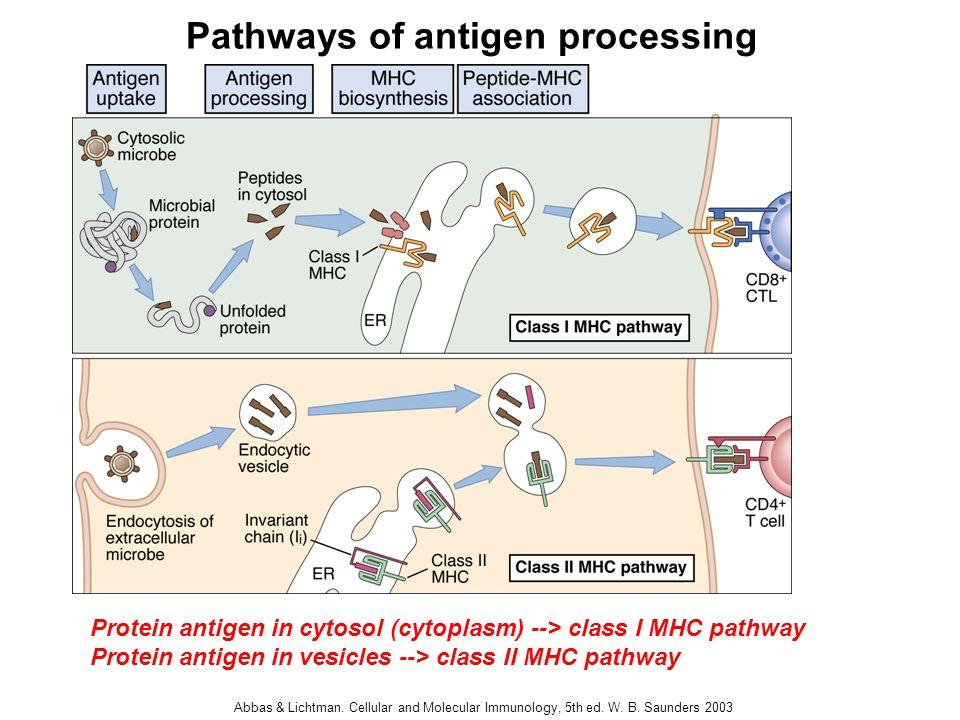 Antigen Presentation a...