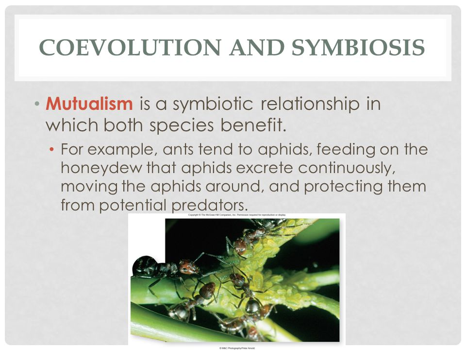 plants and pollinators mutualism relationship