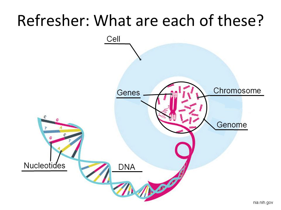Genomics and inheritance ppt download 22 refresher ccuart Images