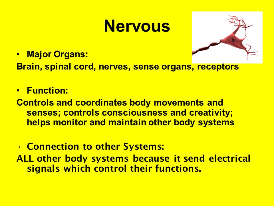 Nervous Major Organs: Brain, spinal cord, nerves, sense organs, receptors. Function: