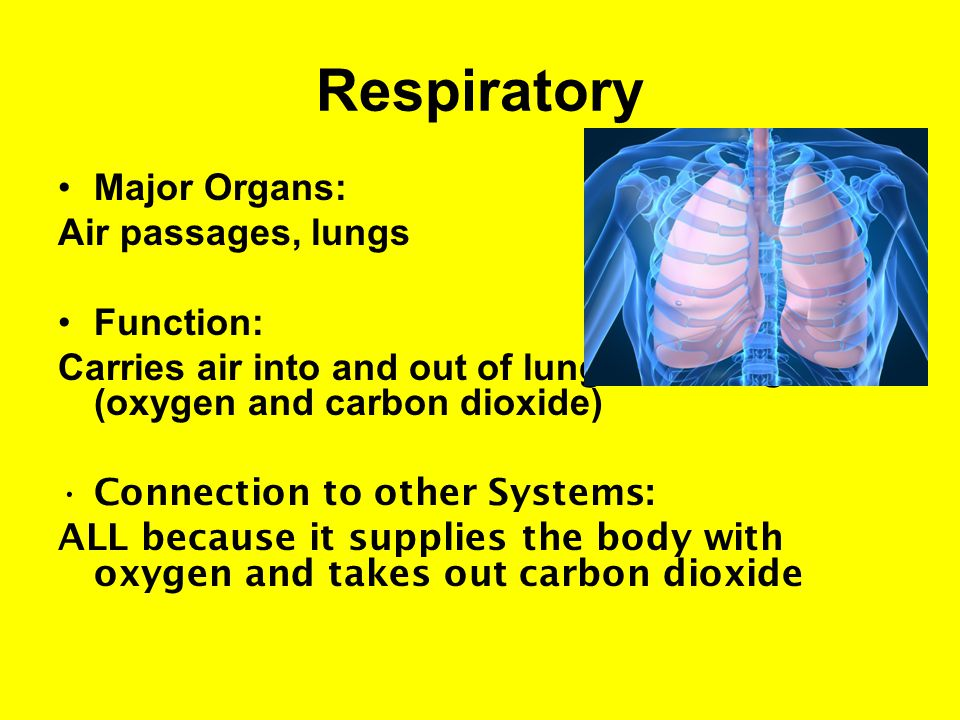 Respiratory Major Organs: Air passages, lungs Function: