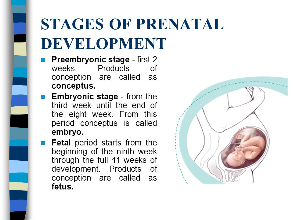 stage of prenatal development The problem with erikson's theory, as with many stage theories of development, is that he describes only a typical pattern next: prenatal development.