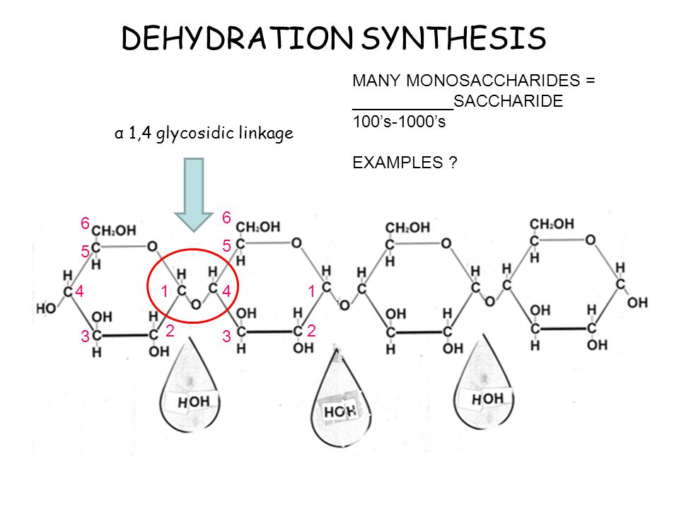 Dehydration Synthesis Example CARB CUTOUTS Thanks to...