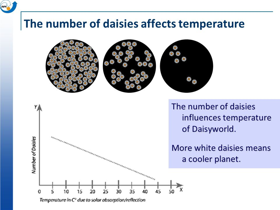 The number of daisies affects temperature