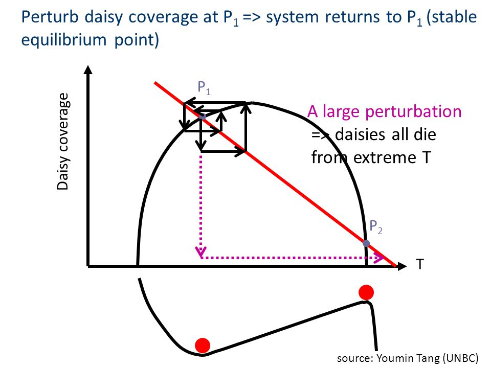 Perturb daisy coverage at P1 => system returns to P1 (stable equilibrium point)