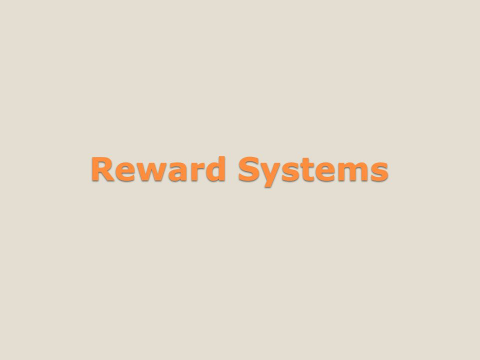 Stock options reward system