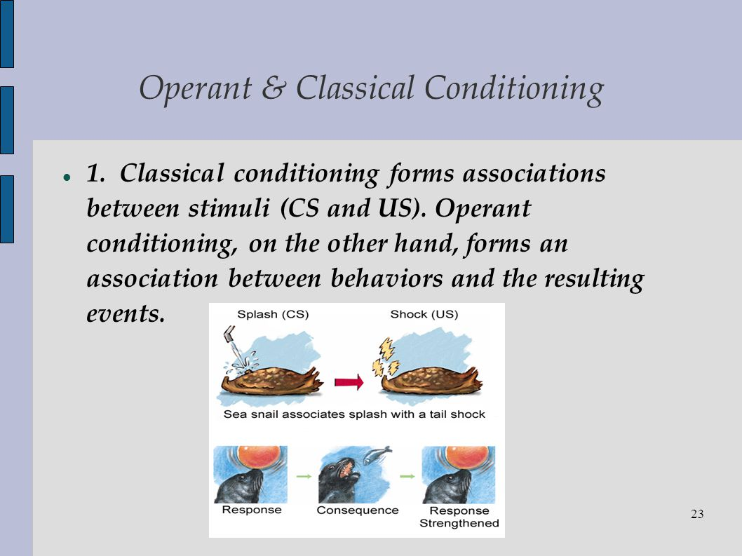 classical and operant conditioning and substance File:drug response in classical conditioningjpg certain drug reactions can also be partly viewed in terms of classical conditioning conditioned drug reactions can occur if a drug is repeatedly paired with a stimulus after a time which the stimulus along can evoke in the drug user the same effects as the drug itself.